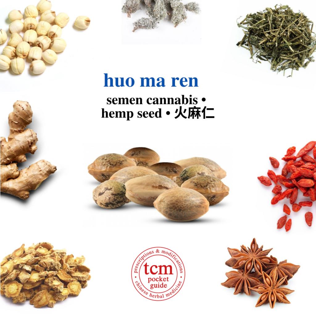 tcm pocketguide - huo ma ren • semen cannabis • hemp seed • 火麻仁 - herb - chinese herb
